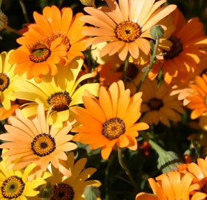 Individual Flower Seed Species