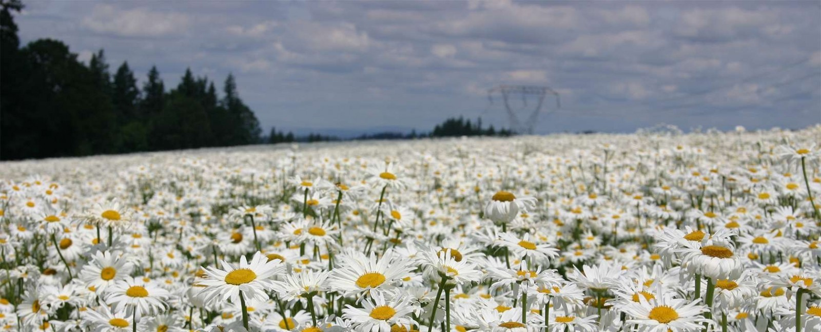 Silver Falls Seed Company Grass Seeds Forage Wildflower Seeds