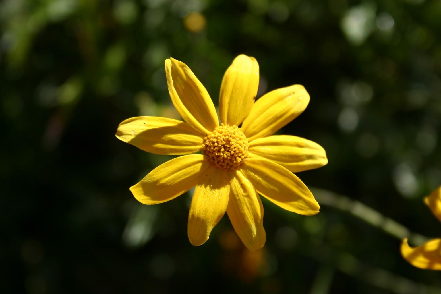 Flower Background Landscape